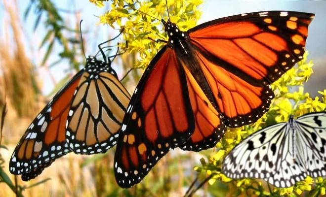 Eduwisata di 7 Taman Kupu-kupu di Indonesia Sangat Mengasyikkan 7 Taman Kupu-kupu di Indonesia