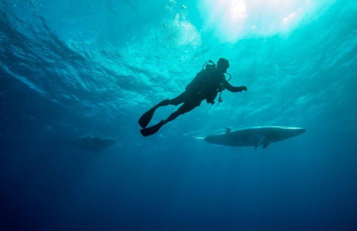 10 Hal Menarik Wajib Kamu Coba di The Great Barrier Reef Australia 10 hal menarik di great barrier reef
