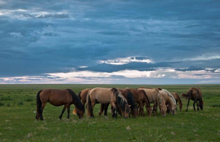 10 Wisata Alam Terbaik di Mongolia Pesonanya Bikin Bahagia